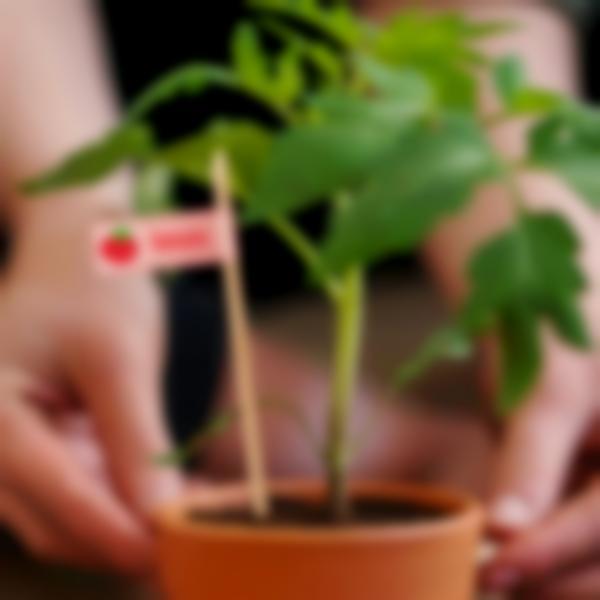 etiquettes marquage plantation graines fr 02
